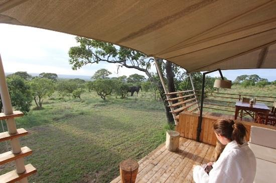 Serengeti Bushtops Camp: think we have visitors.....big, grey ones!