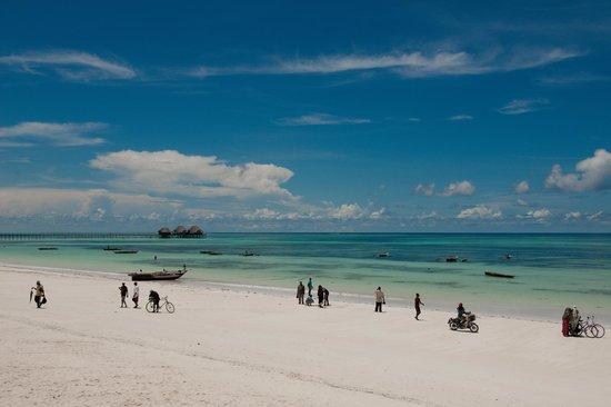 Dongwe Ocean View : Ежедневная тусовка во время возвращения рыбаков