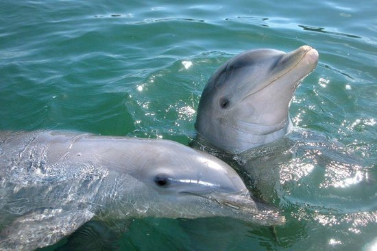 Dolphin Discovery: Dolphins are very social animals.