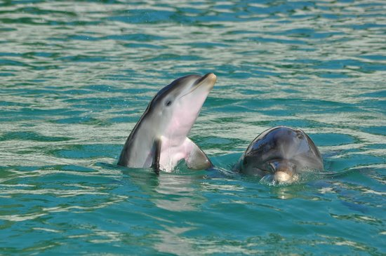 Dolphin Discovery: Hey! It's time to play.