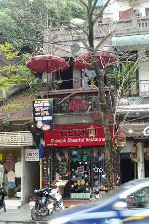 Gecko: At the quiet end of Hang Quat
