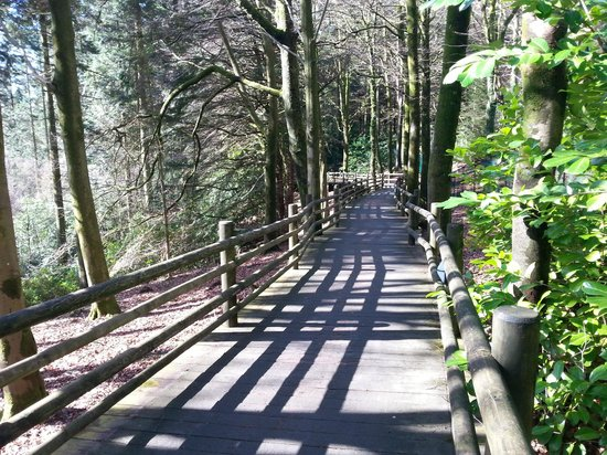 Center Parcs Longleat Forest: A woodland cycle path