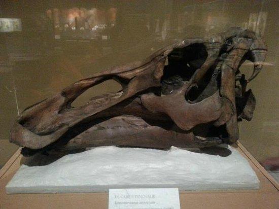 CU Museum of Natural History : Duckbill Dino