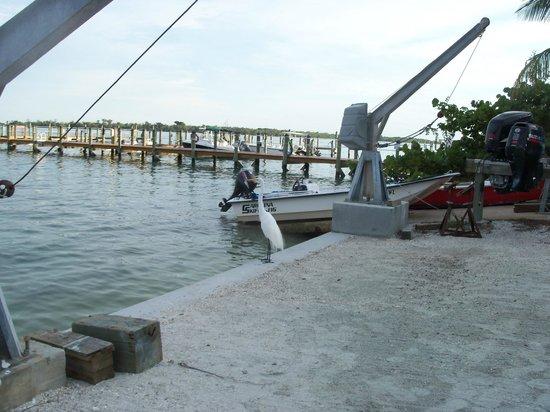 Jensen's Twin Palm Cottages and Marina: Marina