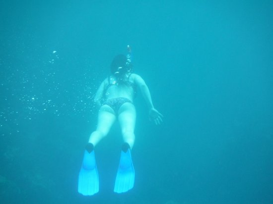 St.Thomas Scuba and Snorkel Adventures: white tail blue fin