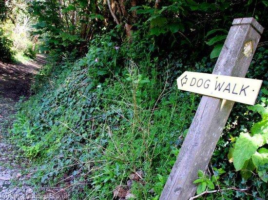 The Valley: Woodland Walk