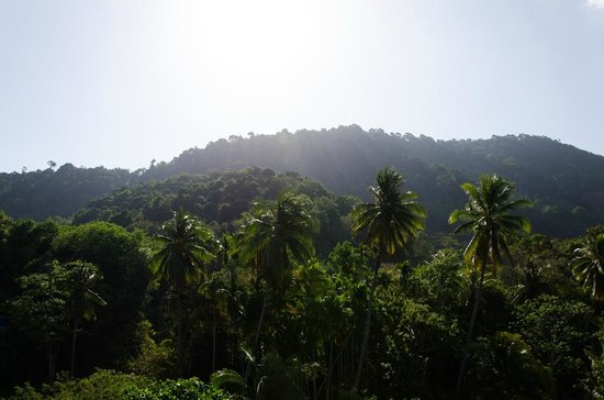 Lanta Mermaid Boutique House: View from our balcony facing the jungle