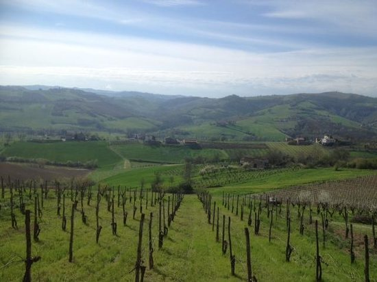 Podere Diamante: view from the diningroom