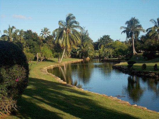 Smith Family Garden Luau: Grounds