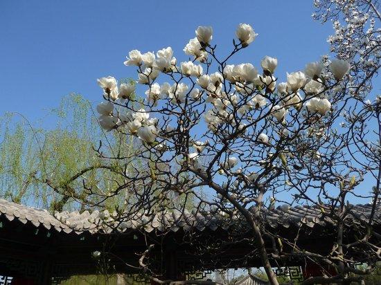 Baotu Spring Park: Le printemps!