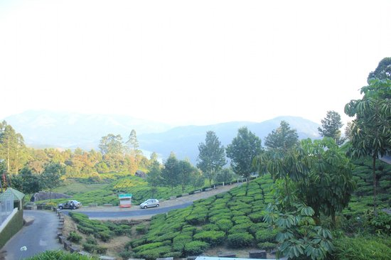 Club Mahindra Munnar: tea estate