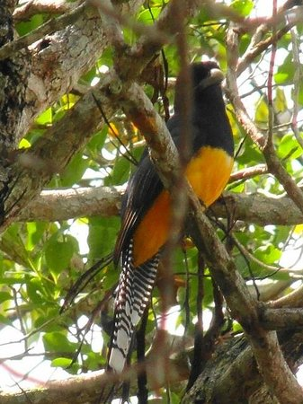 Amazon Ecopark Jungle Lodge: Exotic Amazon Bird