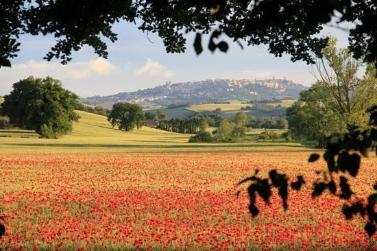 Agriturismo La Sorgente : Vista dal nostro agriturismo