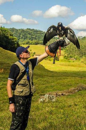 Pomerode: Falcoaria ( com águias,gaviões,corujas e falcões )
