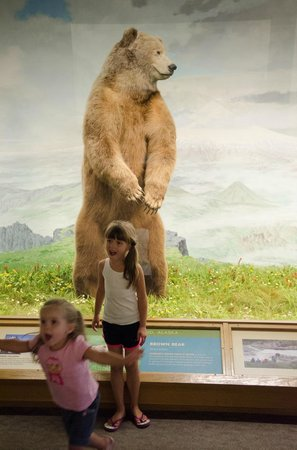 Denver Museum of Nature & Science: Excellent displays
