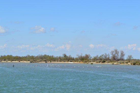 Tiki 3 : faune et flore camarguaise