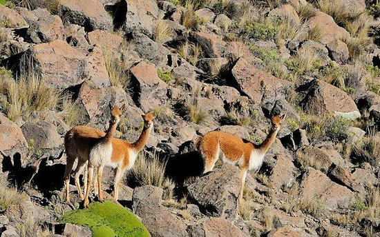 Ausangate: algunos animales que se pueden observar