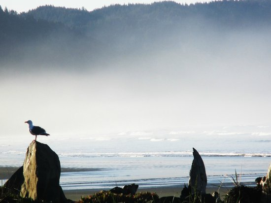 Crescent Beach Motel: Beach in the misty morning