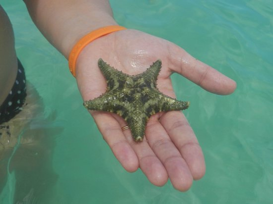 Rondel Village: starfish