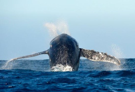 Whale Watch Cabo: Almost like flying