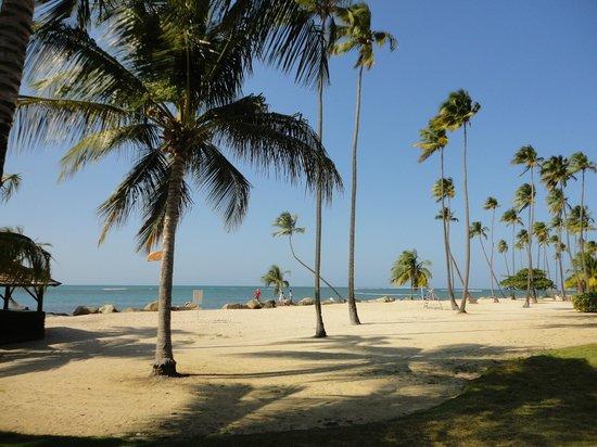 Melia Coco Beach : Front part of beach at Gran Melia