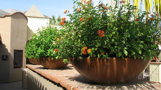 Andreas Hotel & Spa: Flower pot details