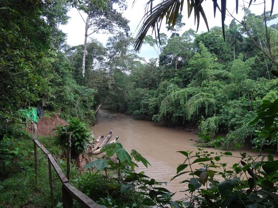 Huaorani Ecolodge: the river from the lodge - this is where I swam