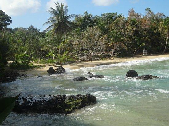 Parque Nacional Marino Isla Bastimentos: la playa red frog