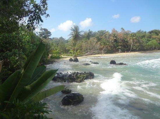Meeres-Nationalpark Insel Bastimentos (Parque Nacional Marino Isla Bastimentos): la playa red frog