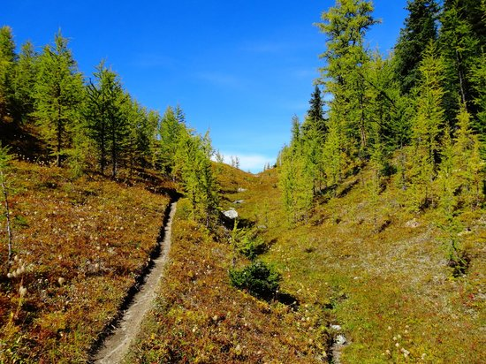 Shadow Lake Lodge: Back country trails