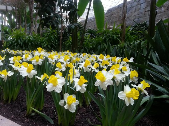 Gaylord Palms Resort & Convention Center: Flowers