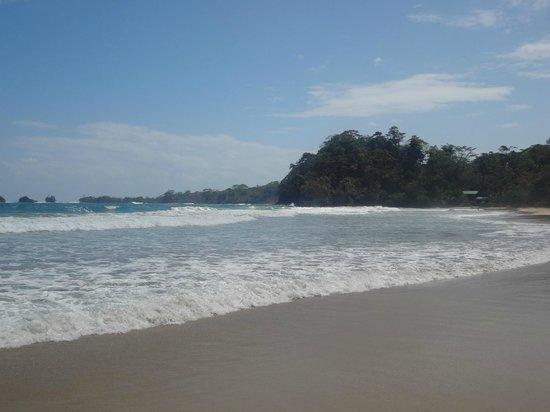 Parque Nacional Marino Isla Bastimentos : la playa red frog
