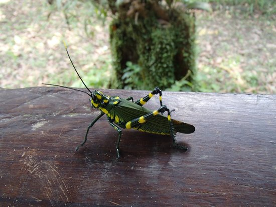 Huaorani Ecolodge: a big and colourful insect on my porch