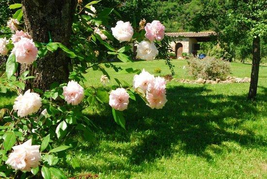 Agriturismo  Podere PratoVecchio : giardino