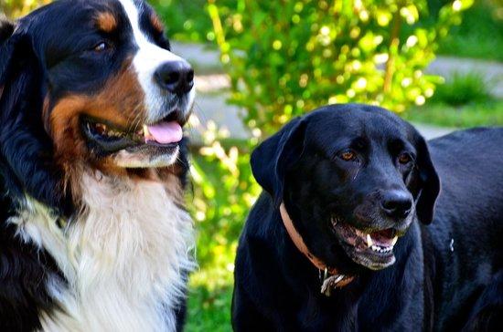 Hotel Boutique CasaEstablo : Dogs