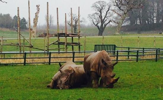 Longleat: breathtaking Rhinos