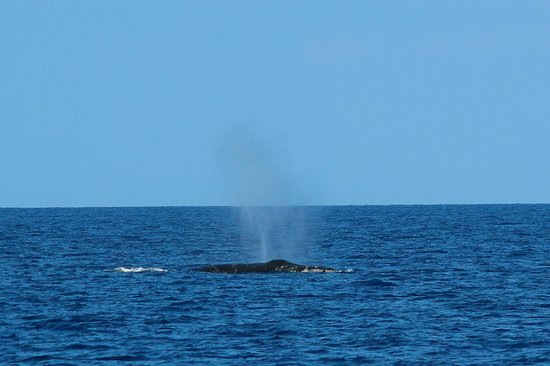Ocean Sports Whale Watch Adventure: Humpback whales on our Ocean Sports Breakfast with Whales Cruise