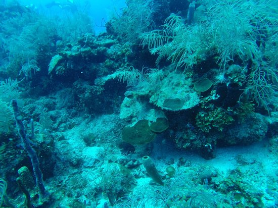 Belize Diving Adventures: Close up on some coral