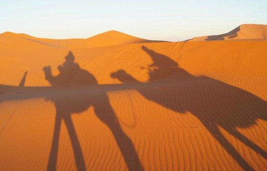 Dunes Line Day Tours : Camels in the Sahara
