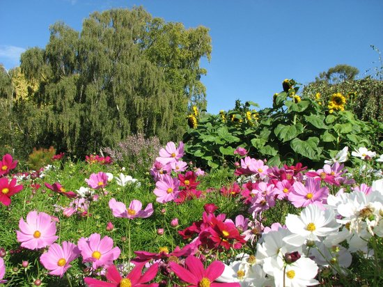 Royal Tasmanian Botanical Gardens: Colourful flowers on a sunny day