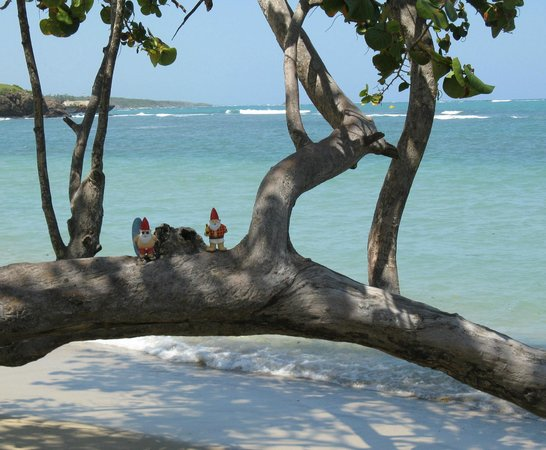 ClubHotel Riu Bachata: Beach Area