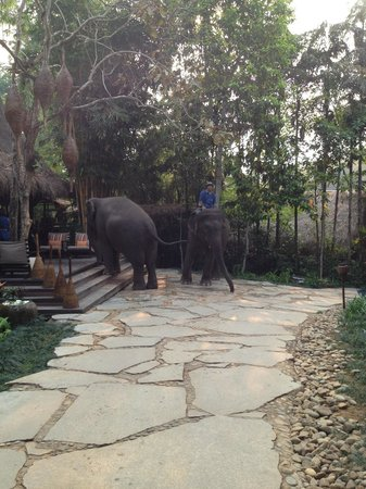 Four Seasons Tented Camp Golden Triangle: Love these creatures.