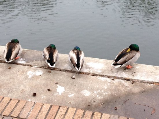 Noble Inns - The Oge House, Inn on the Riverwalk: Frozen ducks on the Riverwalk