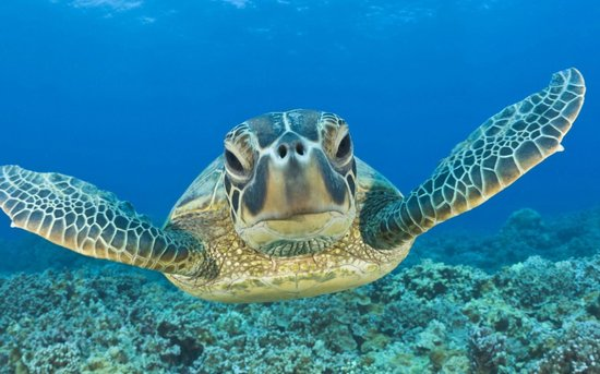 Mayan Divers: Terrance the Turtle
