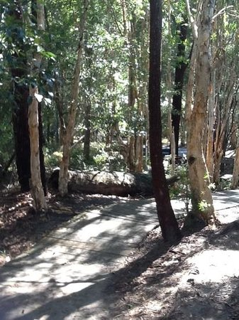 Kingfisher Bay Resort: walkway to reception