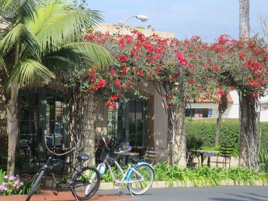 Brisas Del Mar, Inn At The Beach : Lovely grounds