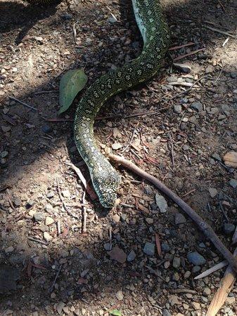 Fraser Coast Wildlife Sanctuary: Photo