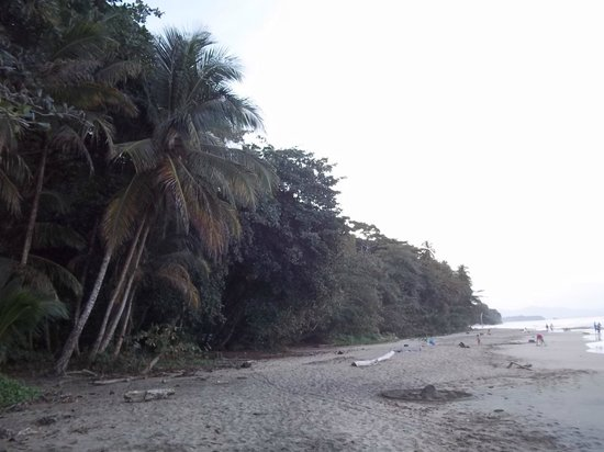 Walaba Hostel & Beach Houses: Beach nearby