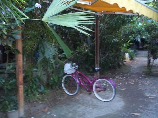 Walaba Hostel & Beach Houses: Grounds
