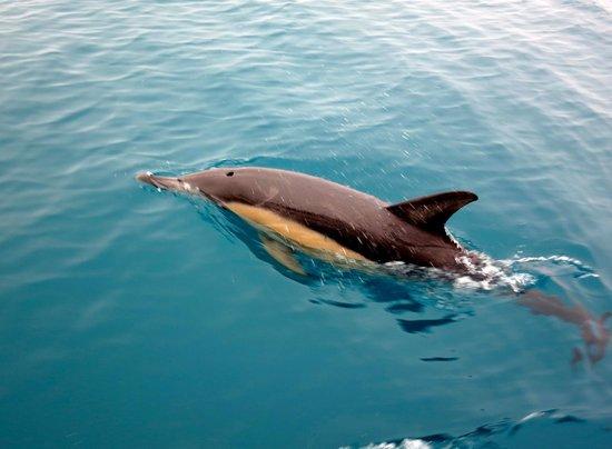 Abel Tasman Ocean View Chalets : dolphin siting